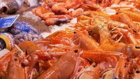 在冰的红色小龙虾在柜台在La Boqueria鱼市上 巴塞罗那 西班牙 股票录像