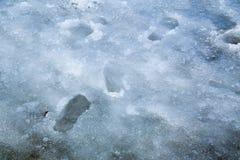 在冰的脚印 免版税库存照片