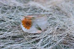 在冰的花 库存图片