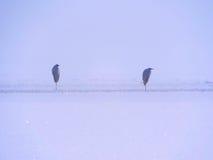 在冰的苍鹭 库存照片