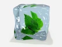 在冰的薄荷的叶子 免版税图库摄影