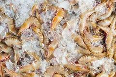 在冰的虾 图库摄影