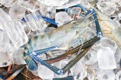 在冰的虾 库存照片