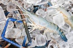 在冰的虾 免版税库存照片