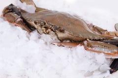 在冰的螃蟹结冰 库存照片