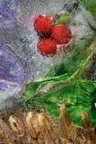 在冰的越橘莓果 库存图片