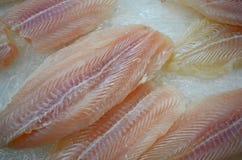 在冰的里面pangasous鱼 免版税库存图片