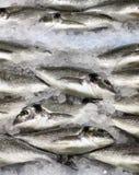 在冰的镀金面顶头鱼 图库摄影