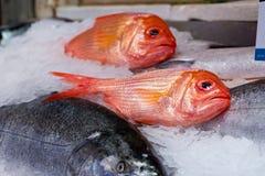 在冰的鱼在市场上 库存照片