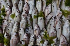在冰的鱼待售在那不勒斯 免版税库存照片