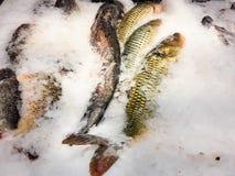 在冰的鱼鲤鱼待售在鱼商店 免版税库存照片