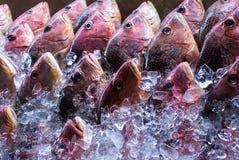 在冰的鱼 库存图片