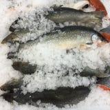 在冰的鱼 库存照片