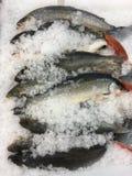 在冰的鱼 图库摄影