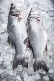 在冰的鲈鱼 免版税库存照片