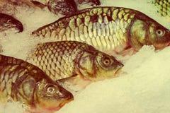 在冰的鲜鱼在市场上 海鲜、非GMO和化学 库存图片