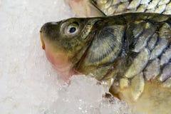在冰的鲜鱼在市场上 海鲜、非GMO和化学 免版税库存照片
