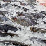 在冰的鲜鱼在鱼市上 免版税库存照片