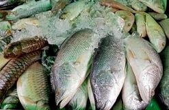 在冰的鲜鱼在鱼市上 免版税库存图片