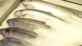 在冰的鲜鱼谎言 界面 影视素材