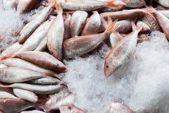在冰的鲜鱼 免版税库存照片