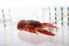在冰的龙虾 库存图片