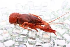 在冰的龙虾 免版税库存照片