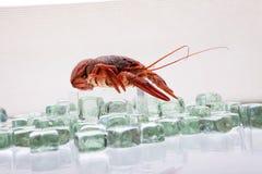 在冰的龙虾 库存照片
