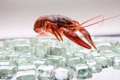 在冰的龙虾 免版税库存图片