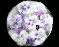 在冰的蝴蝶花花 库存照片