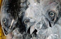 在冰的冻金枪鱼 免版税库存图片