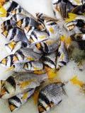 在冰的Faskar在柜台 免版税库存图片