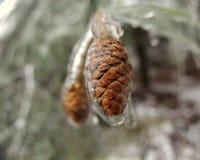 在冰的Pinecones 免版税库存图片