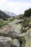 在冰砾之间的杜娟花在奥地利山,提尔 免版税图库摄影