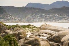 在冰砾海滩的非洲企鹅在南非 免版税库存照片