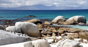 在冰砾海滩的非洲企鹅 库存图片