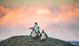 在冰砾的非洲企鹅在日落点燃天空 库存照片