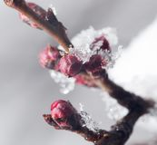 在冰结冰的树特写镜头的芽 图库摄影
