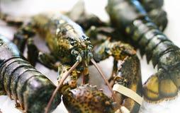 在冰背景在市场上,新鲜的甲壳动物的产品特写镜头的龙虾在餐馆,有用的贝类海鲜 库存照片