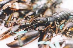 在冰背景在市场上,新鲜的甲壳动物的产品特写镜头的龙虾在餐馆,有用的贝类海鲜 免版税库存照片