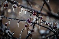 在冰装箱的自然在风暴以后 免版税库存图片