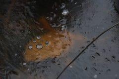 在冰里面的泡影 库存图片