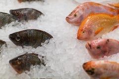 在冰销售的冻鱼在市场上 海鲜 免版税库存图片