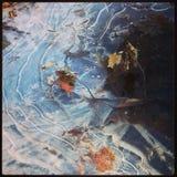 在冰锁的叶子 免版税库存图片