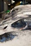 在冰,派克集市,西雅图,华盛顿的三文鱼 免版税图库摄影