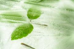 在冰结冰的叶子 免版税库存照片