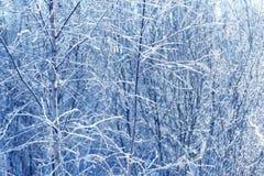 在冰结冰的树枝 在冬天用雪报道的森林分支的冻结的树枝 库存照片