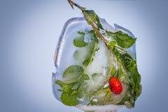 在冰结冰的野玫瑰果分支 库存照片