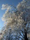 在冰暴以后的蓝天 免版税库存照片