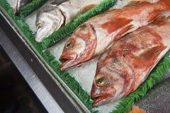 在冰& x28的红鲷鱼; Eyes& x29; 免版税库存图片